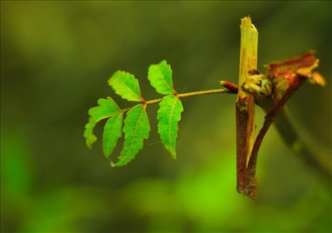 First+Leaf