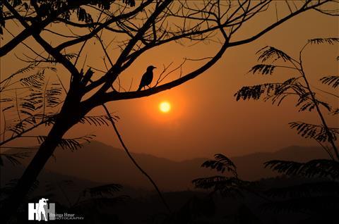 Bird under the Sun Rise