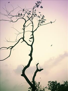 Fly+high