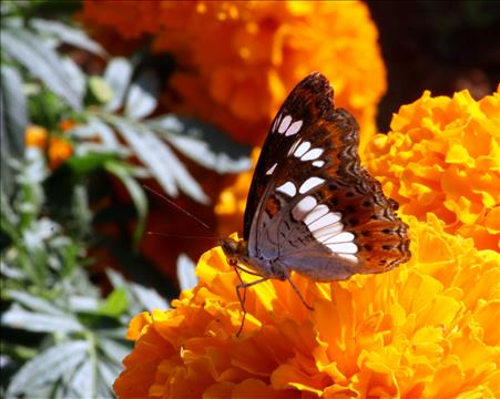 Beautiful+butterfly