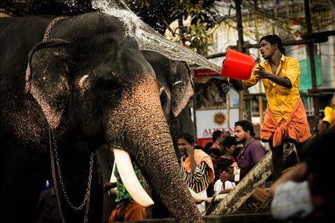 Elephant+bath