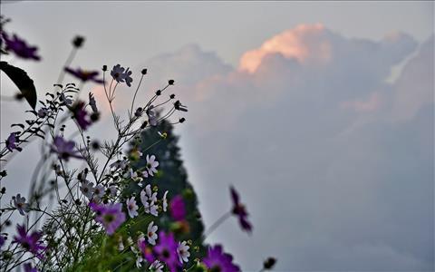 Nature at Dusk