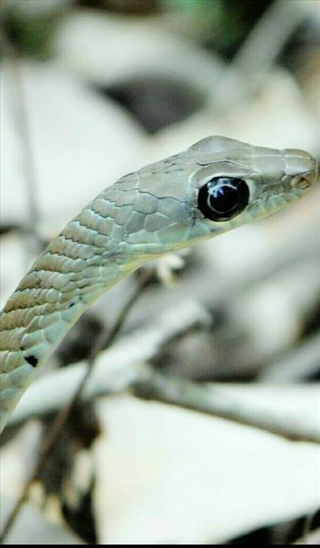mesmerizing snake