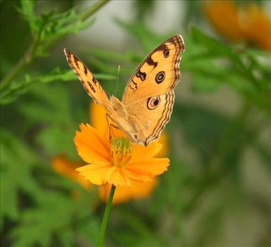 Yellow+Coloured+Butterfly