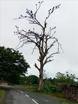Dry+Tree