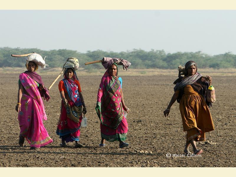 Koli women on the way in the Little Rann of Kutch.