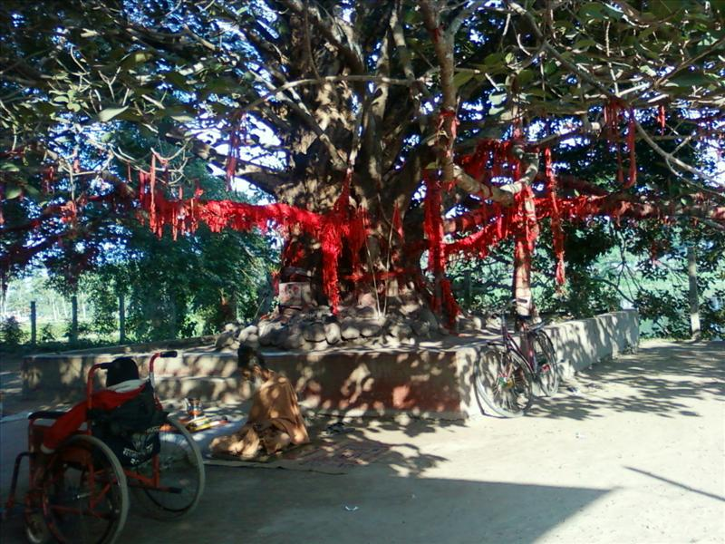 Banyan tree near Jalpesh Temple