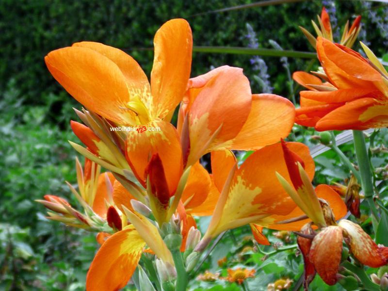 Flowers at Conservatory Garden, New York