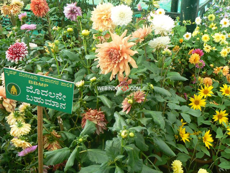 Lalbagh Flower and Horticulture Show 2010