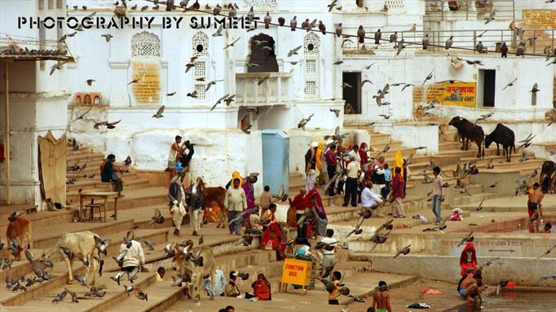 The Pushkar