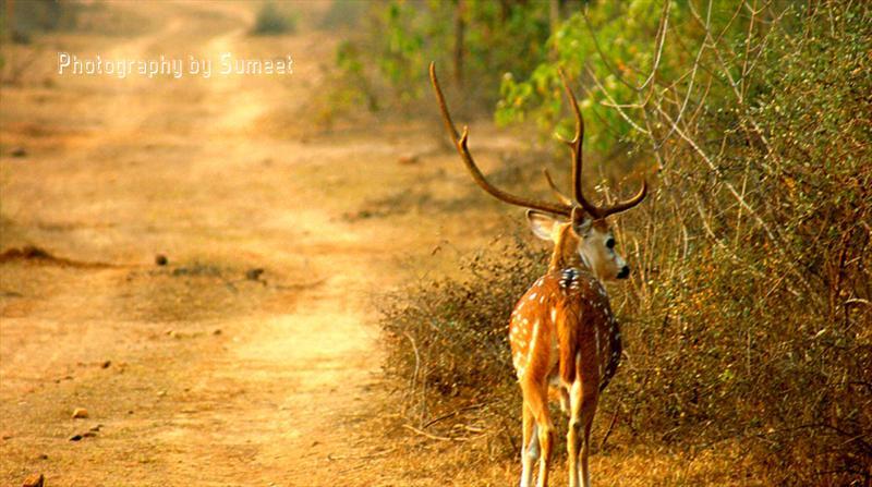 Sariska Tiger Reserve