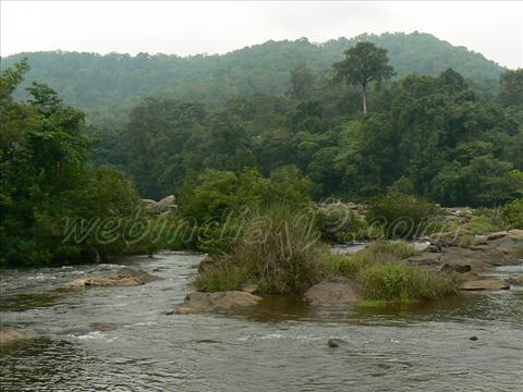 Pooyamkutti