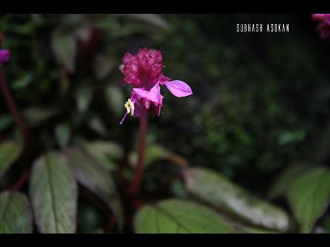 Purple Colour Flower