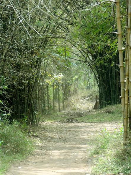 Nisargadhama Bamboo Forest, Coorg