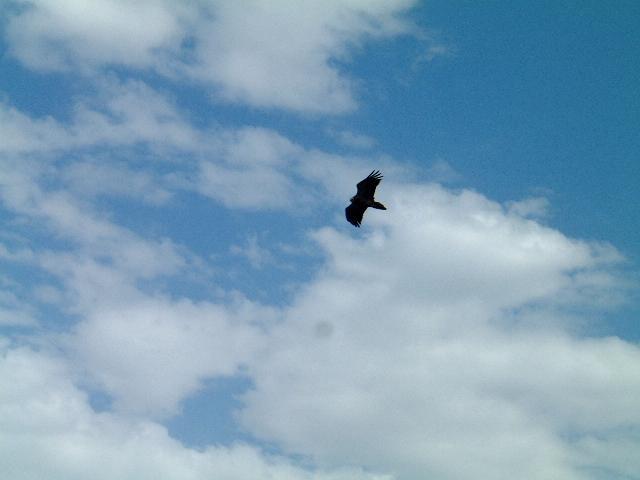 The Eagle Flight!